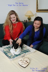 High Tea in Cat Heaven